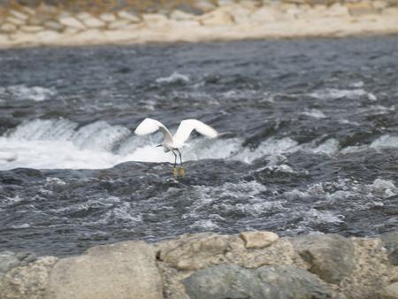錦帯橋の鳥2