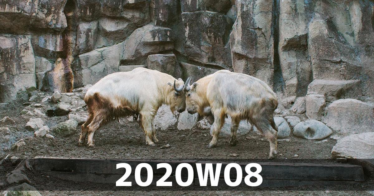 f:id:ymmtdisk:20200225165255j:plain