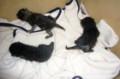 [黒猫3匹]