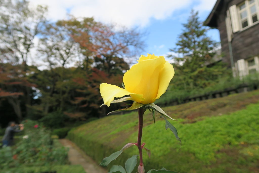 f:id:ynakamurachicago:20181201193003j:plain