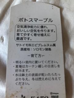 f:id:ynanako:20191008205818j:plain