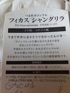 f:id:ynanako:20191008210103j:plain