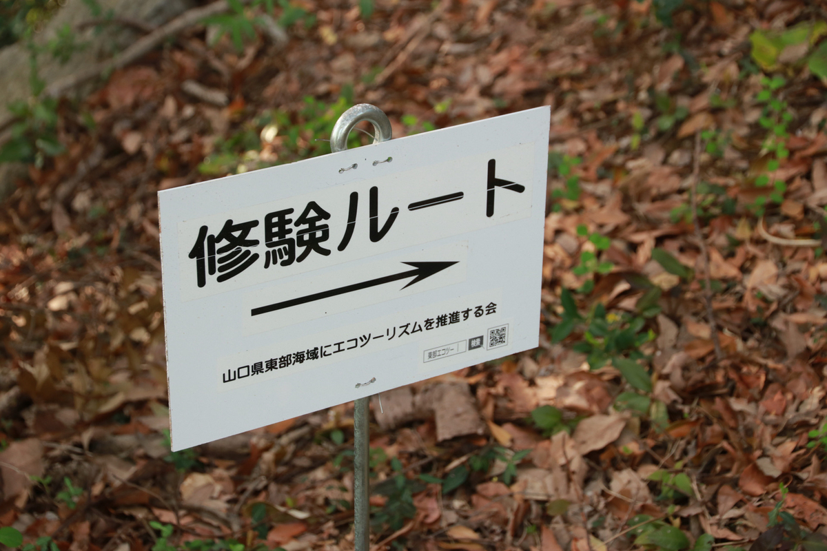 f:id:yo-ji03:20200529000739j:plain