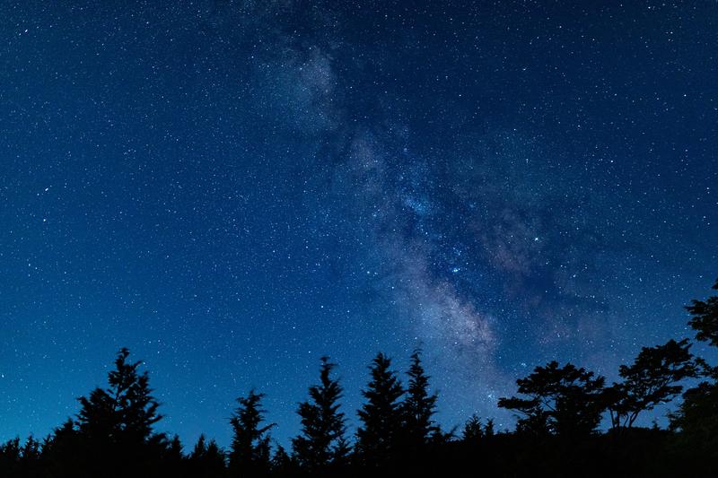 森から見える星空