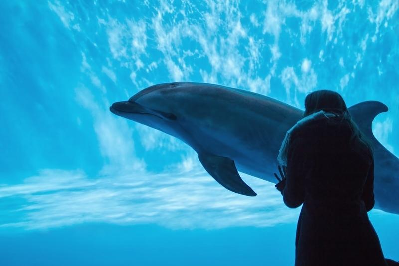 水族館のイルカとそれを見ている少女