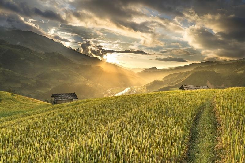広大な畑の風景