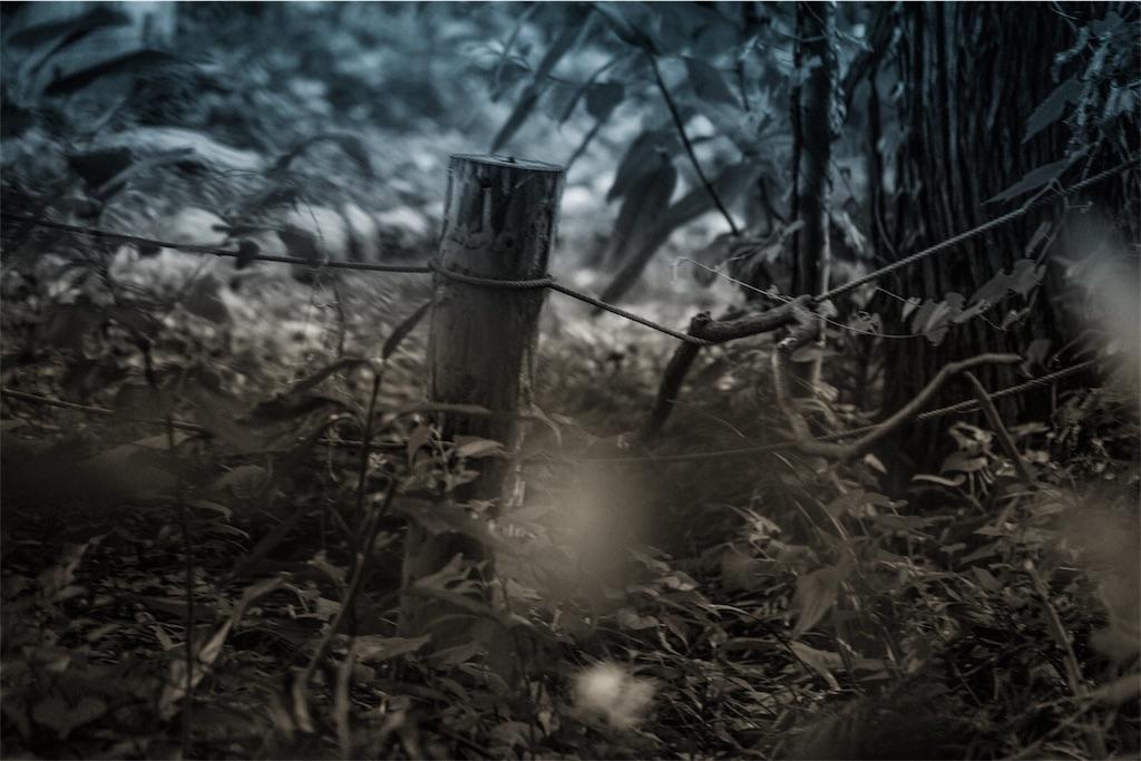 モノクロの荒野の写真