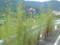 椿堂への道