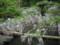 春日神社 万葉植物園