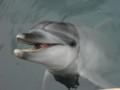 太地くじら浜公園 イルカに餌付け