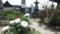 天寧寺 牡丹