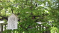 本堂の左手に菩提樹