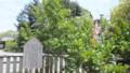 本堂の右手に沙羅の木