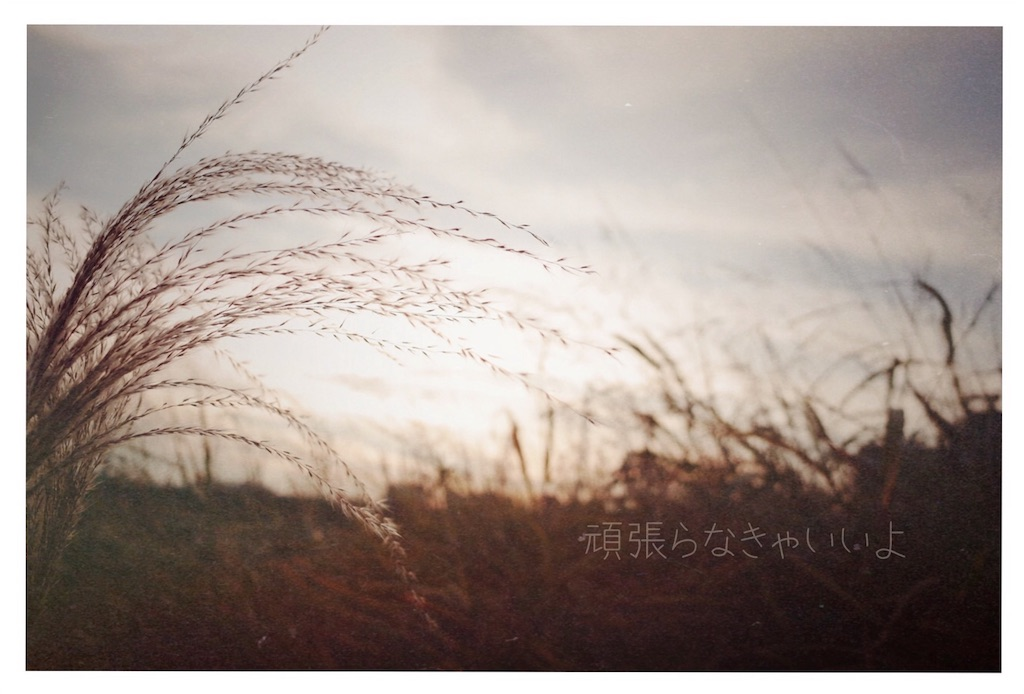 f:id:yoco_0531:20161212053501j:image