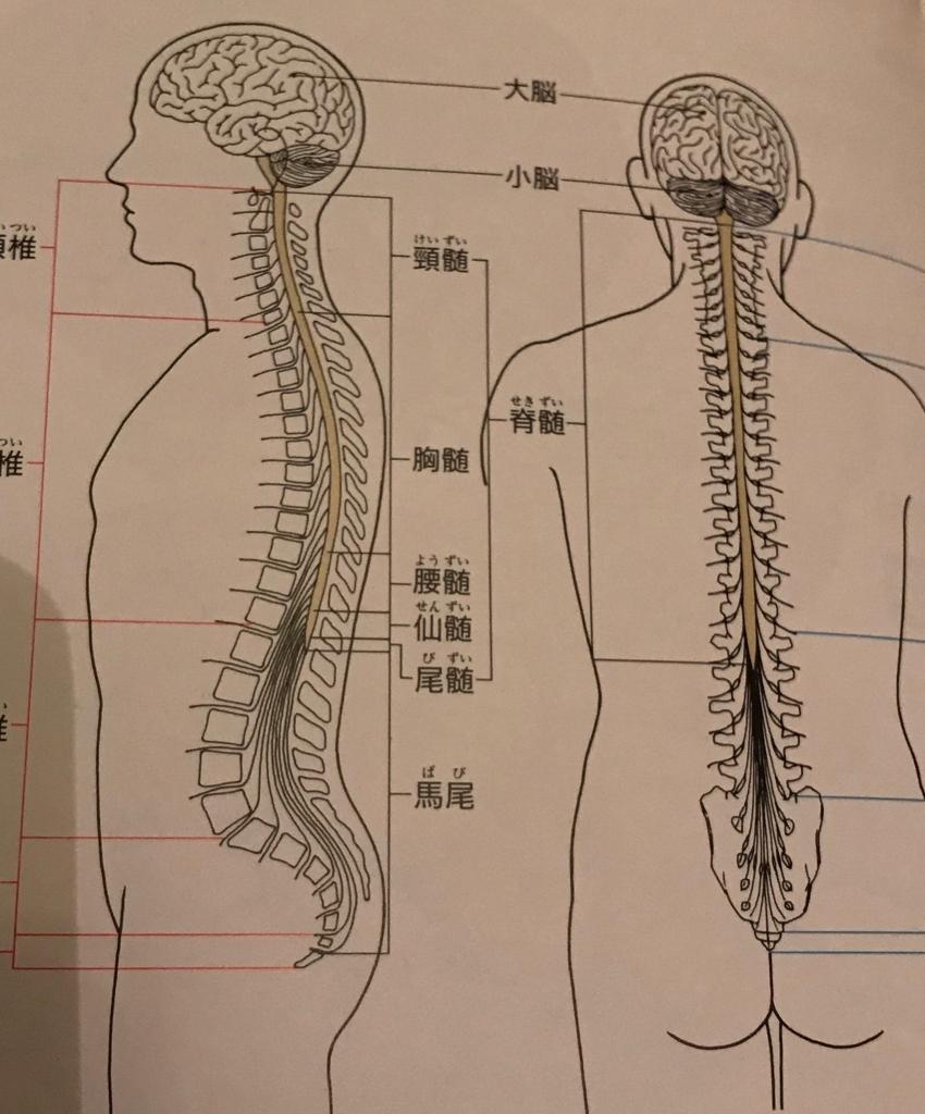 f:id:yoga-nagi:20170801225916j:plain