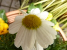 f:id:yogablackbird:20110228155138j:image