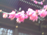 f:id:yogablackbird:20110301144221j:image