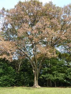 f:id:yogablackbird:20111008155810j:image