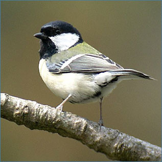 f:id:yogablackbird:20111111094108j:image