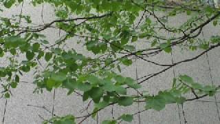 f:id:yogablackbird:20120421230511j:image