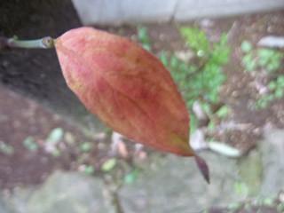 f:id:yogablackbird:20121123233221j:image