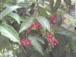 f:id:yogablackbird:20121231123854j:image