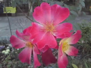 f:id:yogablackbird:20121231124622j:image
