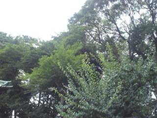 f:id:yogablackbird:20130629225530j:image