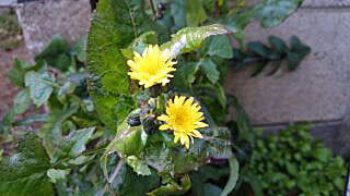 f:id:yogablackbird:20150321210815j:image