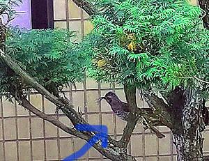 f:id:yogablackbird:20210503221338j:plain