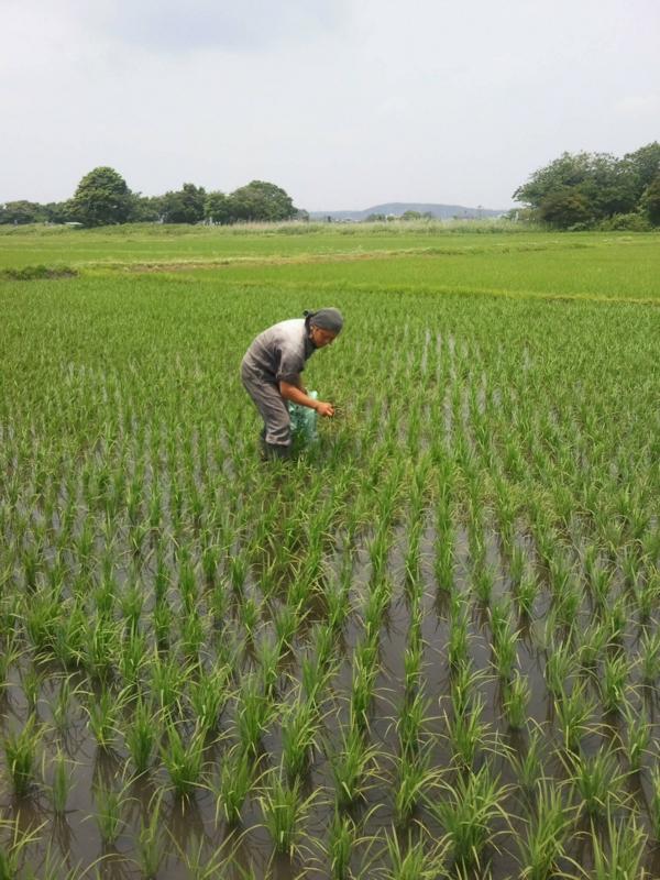 f:id:yoichiro-chiharu-miu:20120620221619j:image