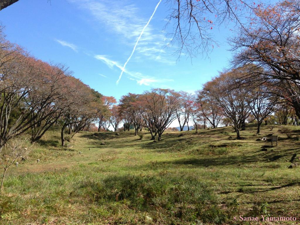 f:id:yoiyoi-kawakami:20190311133102j:plain