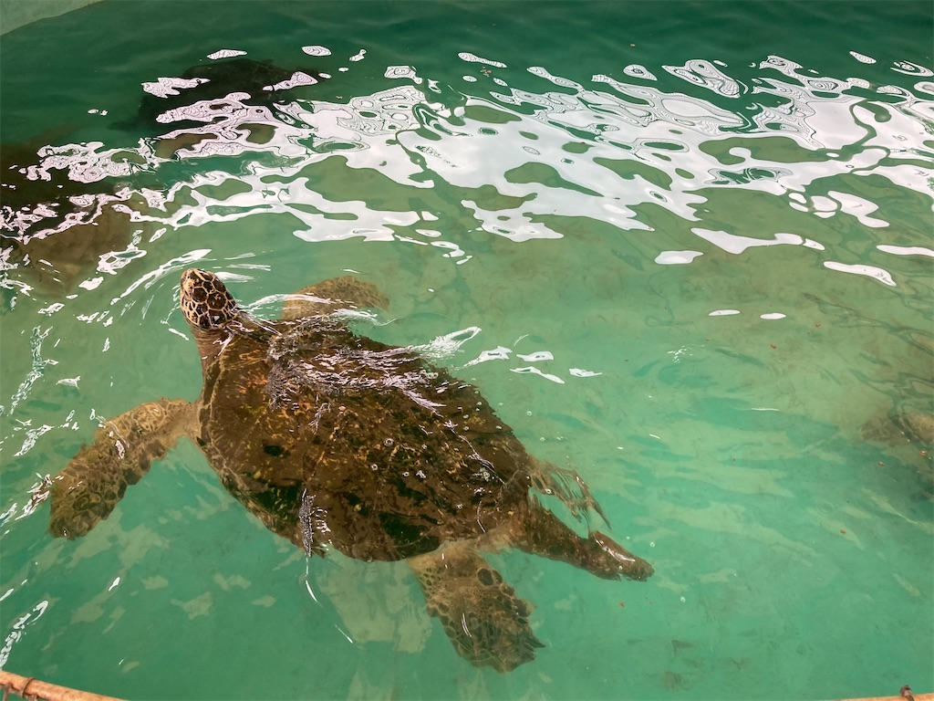 渋川マリン水族館泳ぐ泳ぐ亀