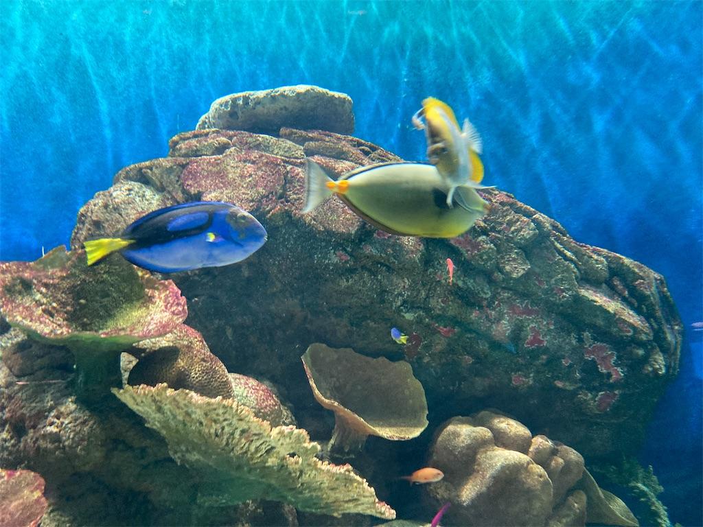 城崎熱帯魚