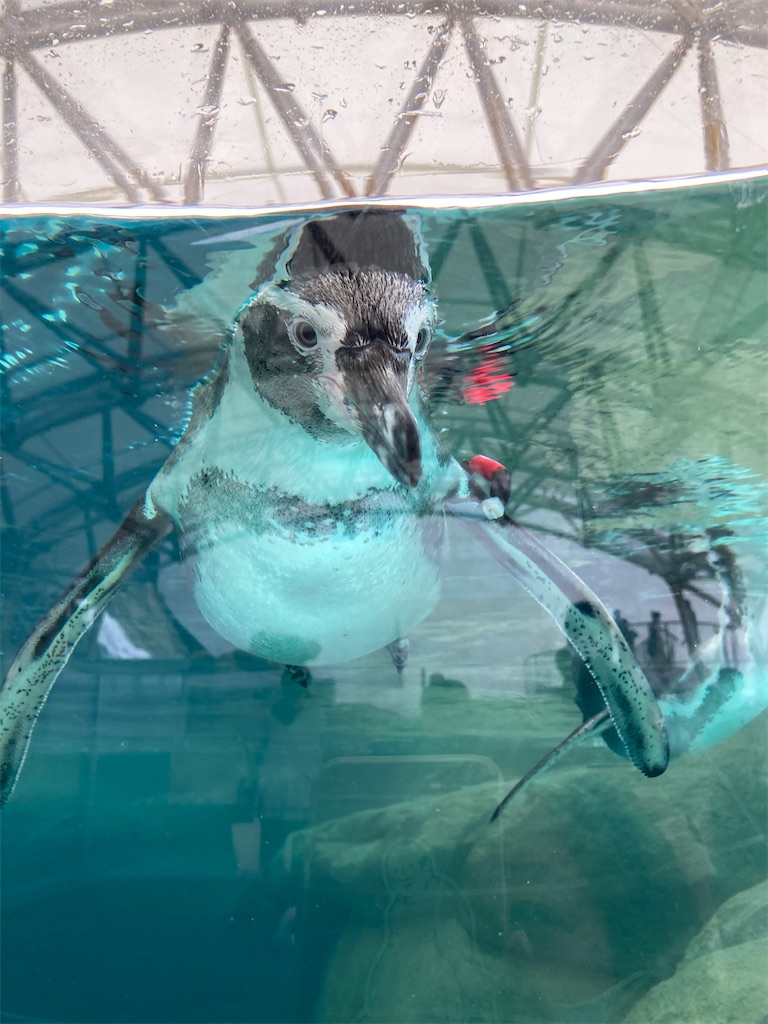 城崎ペンギン1