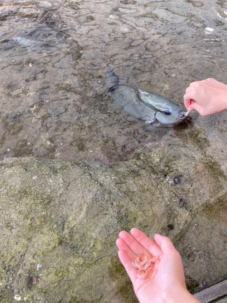 城崎魚餌やり