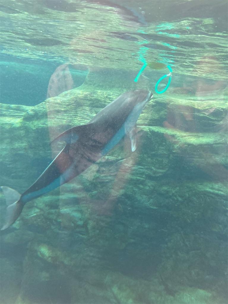海遊館イルカ