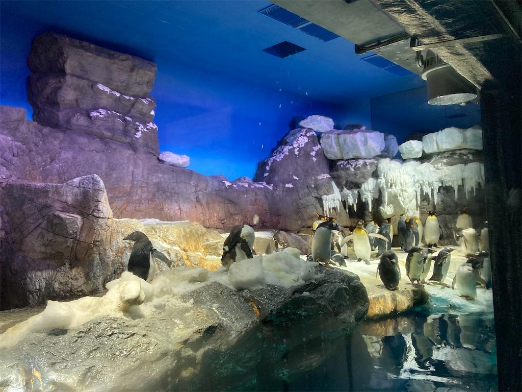 海遊館ペンギン2