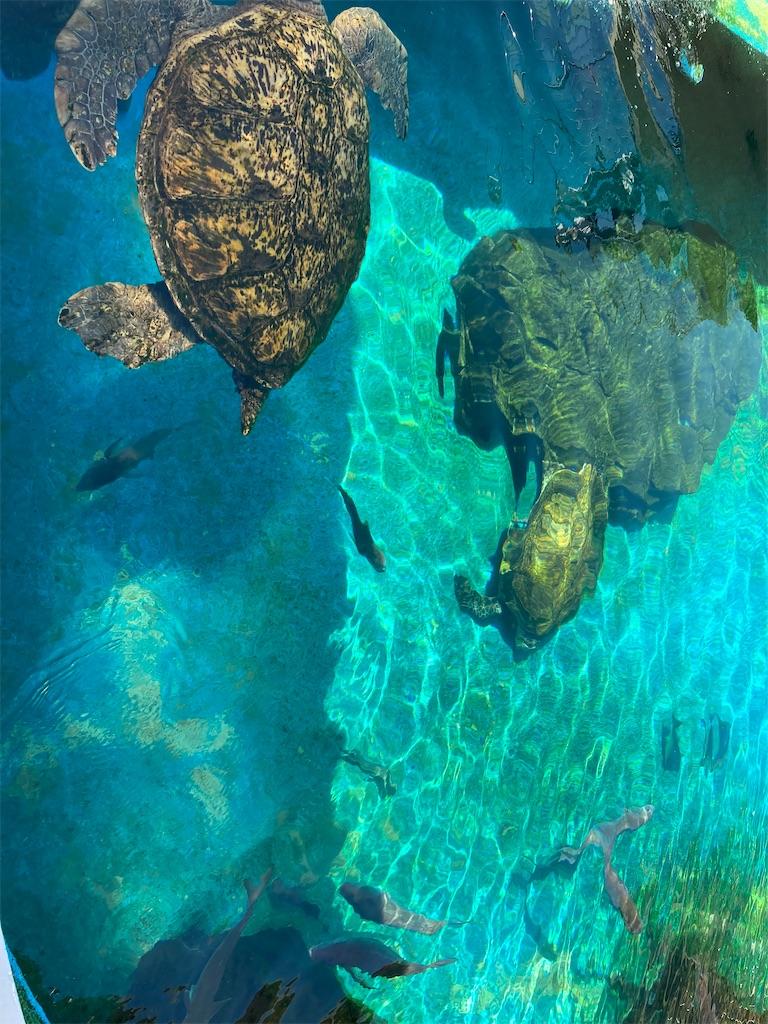 姫路市立水族館泳ぐ亀