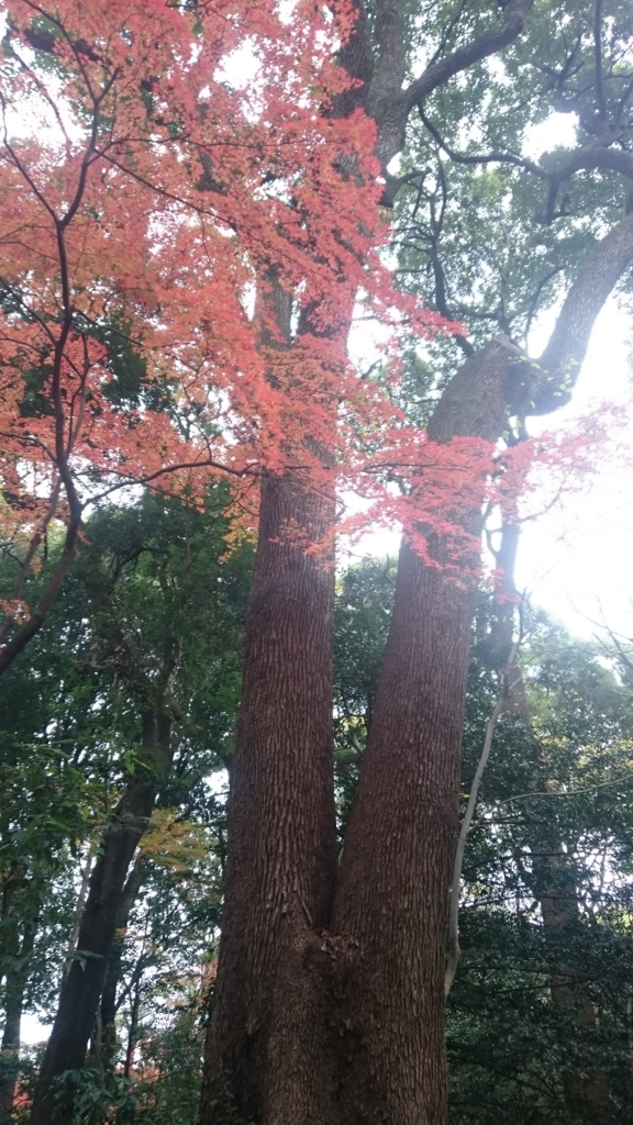 f:id:yokaze-yumeyui:20161207195259j:plain