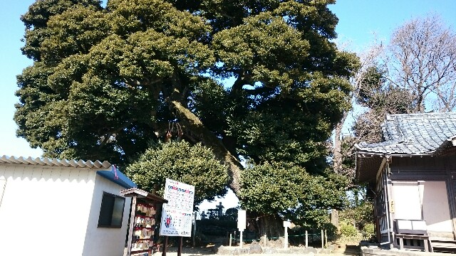 f:id:yokaze-yumeyui:20170201112535j:image