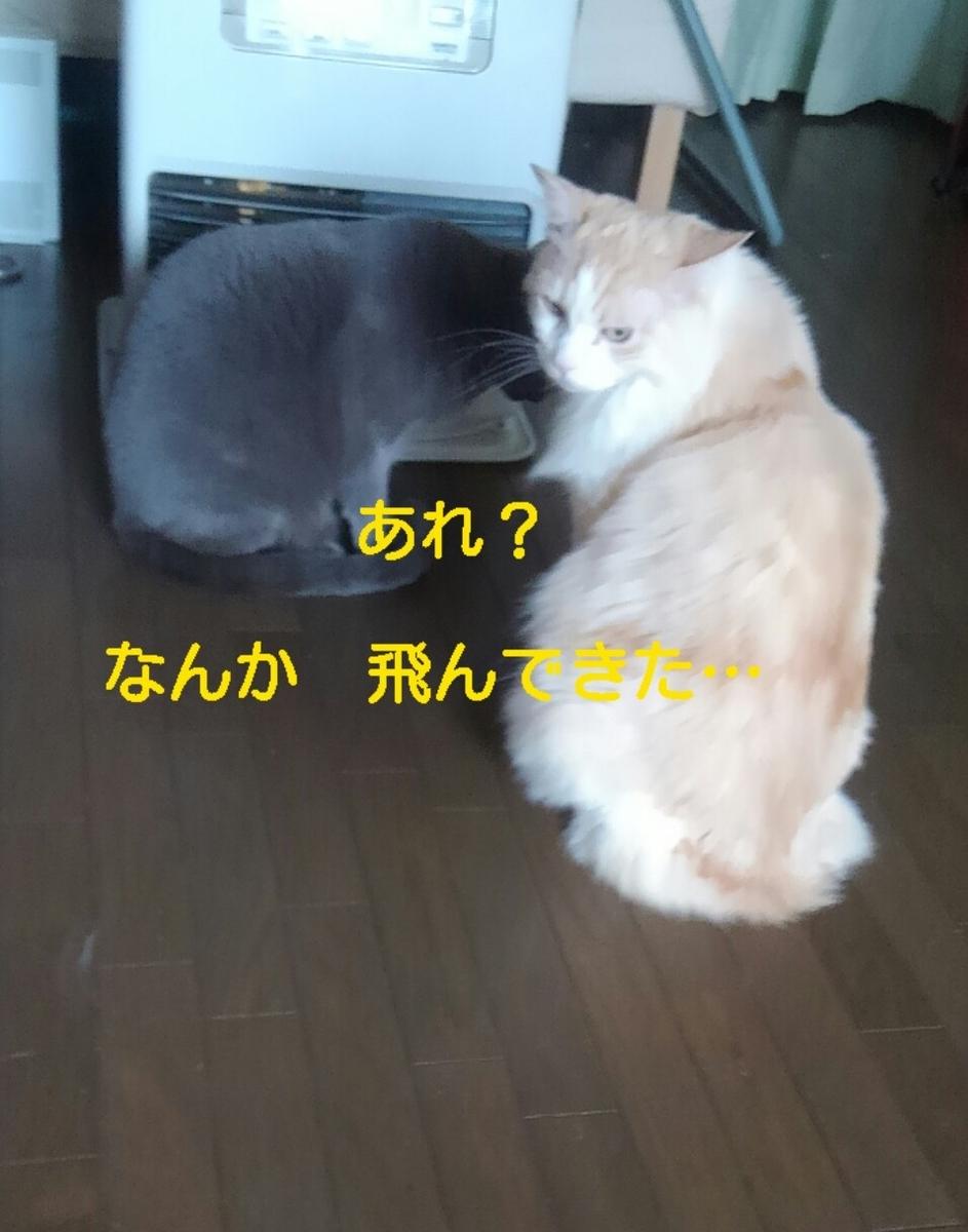 f:id:yoko0081jun:20200219233533j:plain