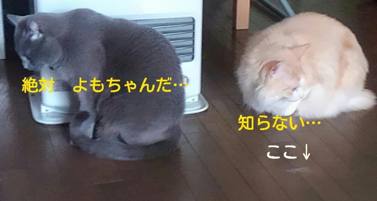 f:id:yoko0081jun:20200219233658j:plain
