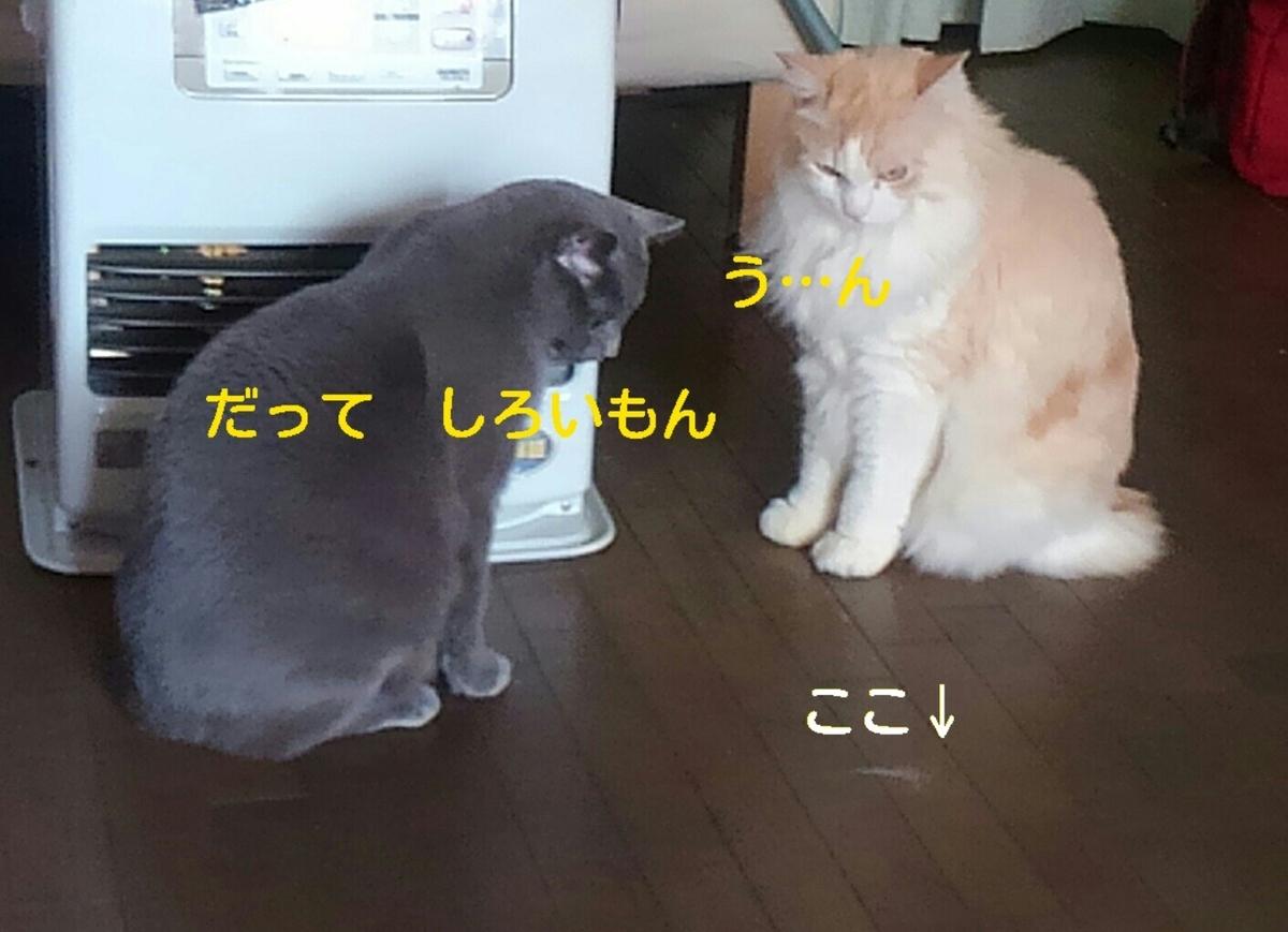 f:id:yoko0081jun:20200219233722j:plain