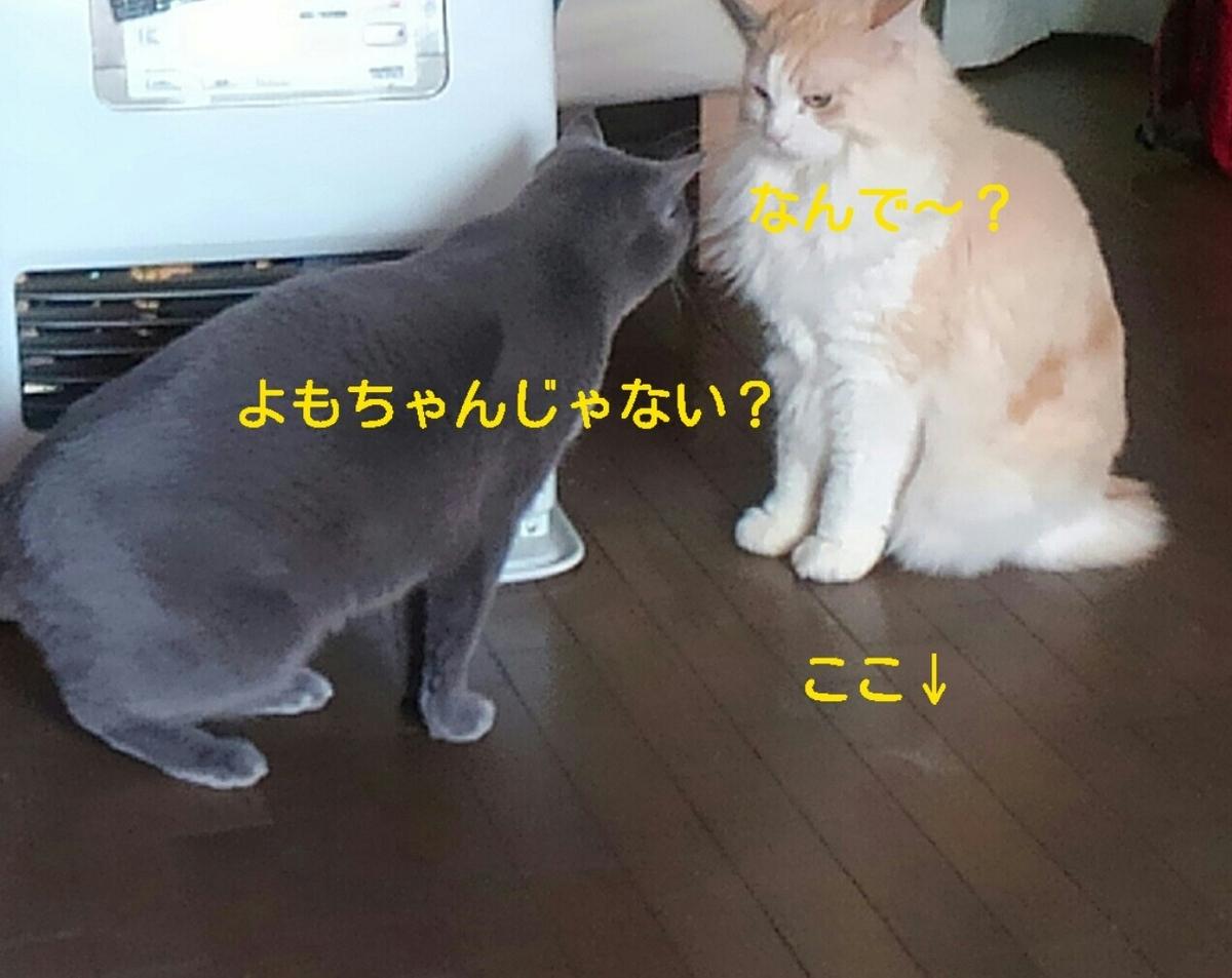 f:id:yoko0081jun:20200219233843j:plain