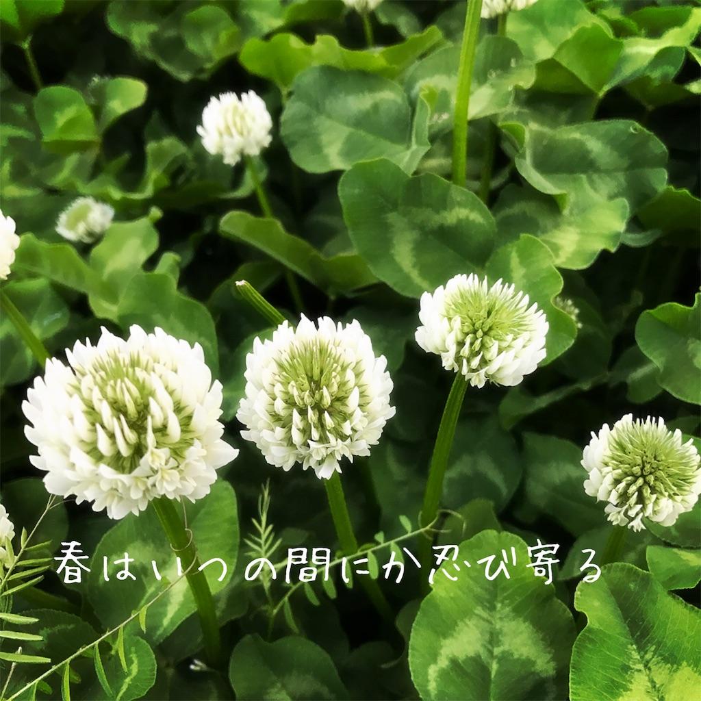 f:id:yoko_t:20170403175008j:image