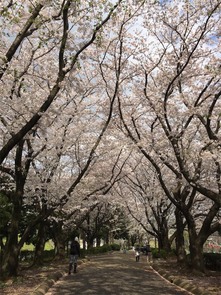 f:id:yoko_yokohama:20170413181344j:image