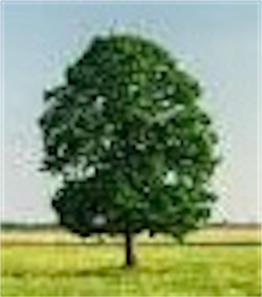 f:id:yokocamera:20200207085428j:image