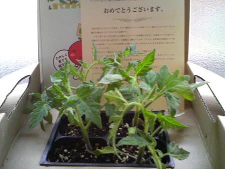 f:id:yokohama-kukan:20070531140217j:image