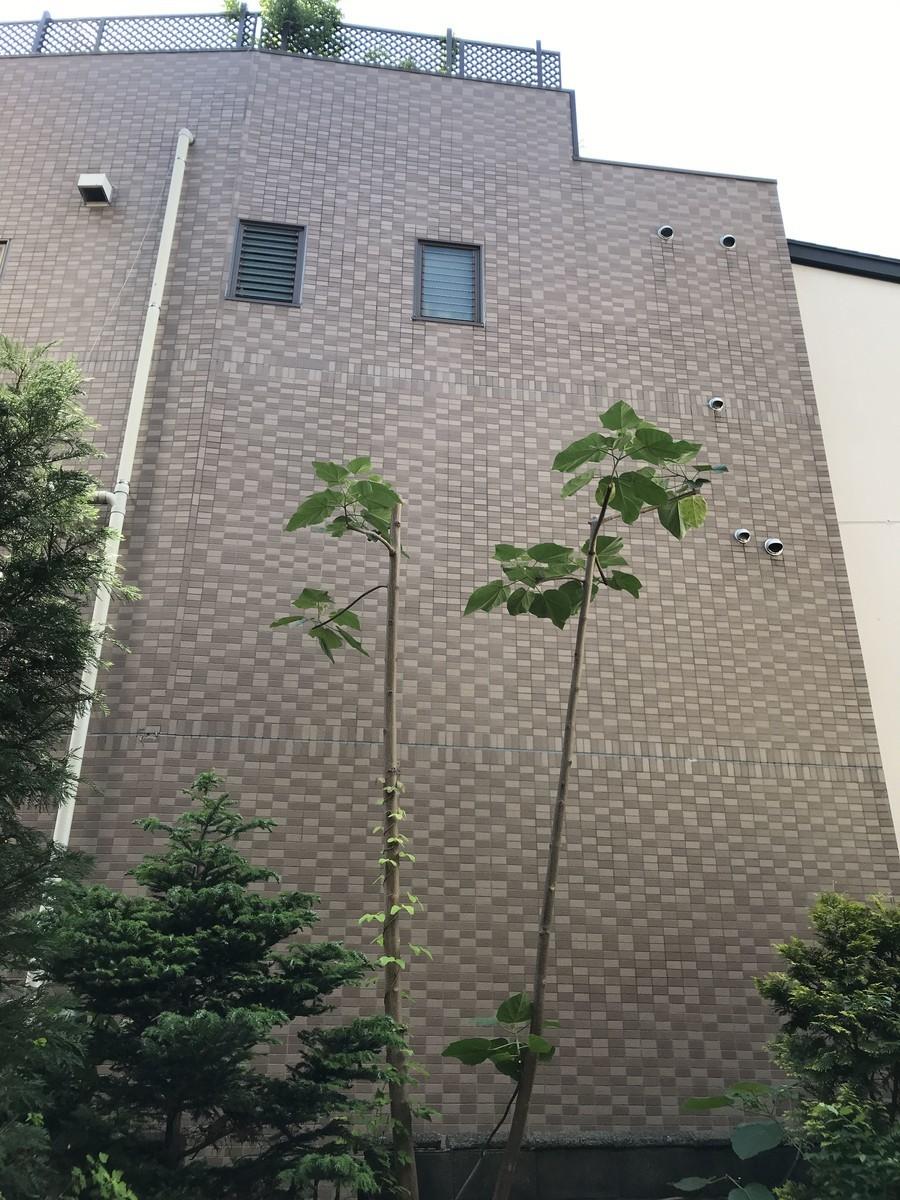 f:id:yokohama-kukan:20190524150512j:plain